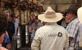 Tour of the Shearing Shed