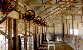 Inside the historic shearing shed