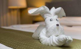 Hotel Jen Cute towel folded into dog