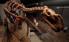 Hughie the dinosaur